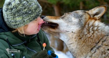 27.Bożena Walencik i wilk Bystry © Jan Walencik 2017